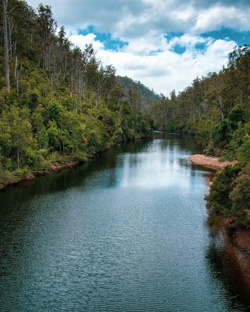 Pionowe Ujęcie Długiej Rzeki Z Drzewami Na Brzegach Darmowe Zdjęcia