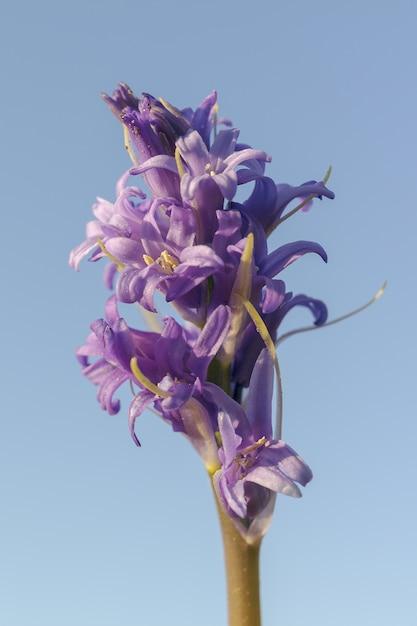 Pionowe Ujęcie Fioletowego Kwiatu O Nazwie Blue Tango Pod Błękitnym Niebem Darmowe Zdjęcia