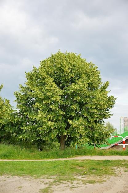 Pionowe Ujęcie Jednego Zielonego Drzewa świeżego W Ciągu Dnia Darmowe Zdjęcia