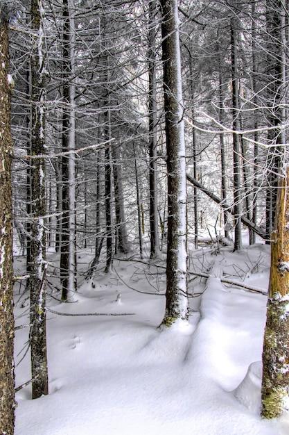 Pionowe Ujęcie Lasu Pokrytego śniegiem W Zimie Darmowe Zdjęcia