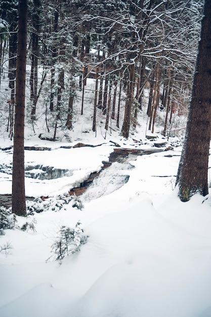 Pionowe Ujęcie Lasu Z Wysokimi Drzewami Pokrytymi śniegiem Darmowe Zdjęcia