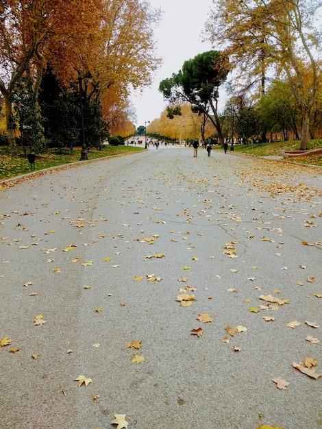 Pionowe Ujęcie Ludzi Idących Obok Drzew W Parku Jesienią Darmowe Zdjęcia