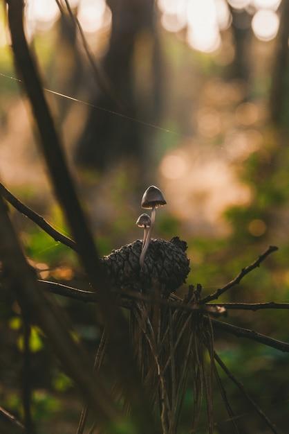 Pionowe Ujęcie Małych Grzybów Rosnących Na Sosnie Darmowe Zdjęcia