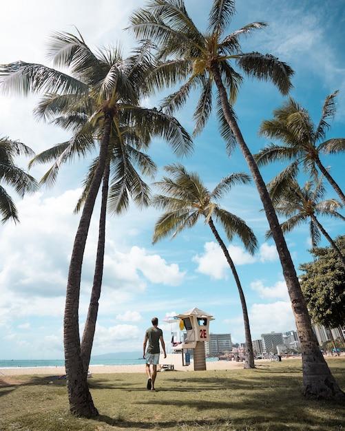 Pionowe Ujęcie Mężczyzny Idącego Na Plaży Pokrytej Palmami, Ciesząc Się Słonecznym Dniem Darmowe Zdjęcia