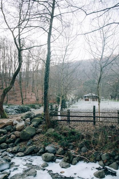 Pionowe Ujęcie Nagich Drzew W Lesie Na Zimowy Dzień I Mały Dom Darmowe Zdjęcia