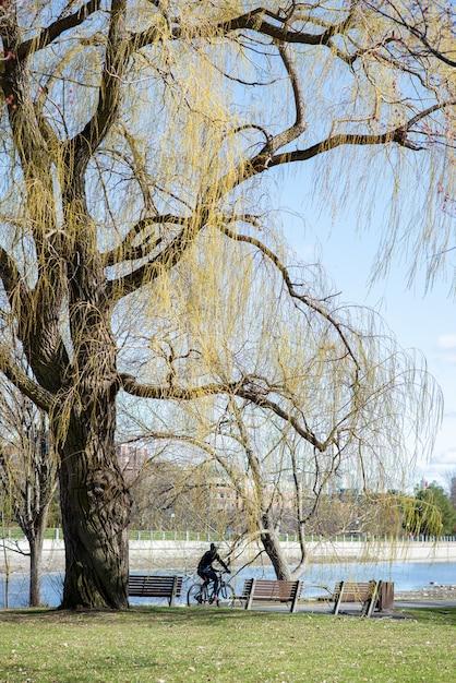 Pionowe Ujęcie Osoby Jadącej Na Rowerze W Parku W Słoneczny Dzień Darmowe Zdjęcia