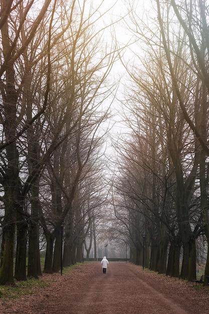 Pionowe Ujęcie Osoby Na Chodniku W Parku Pełnym Nagich Drzew Darmowe Zdjęcia