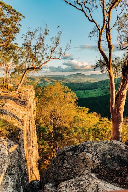 Pionowe Ujęcie Pięknych Drzew W Górach Zrobionych W Queensland W Australii Darmowe Zdjęcia
