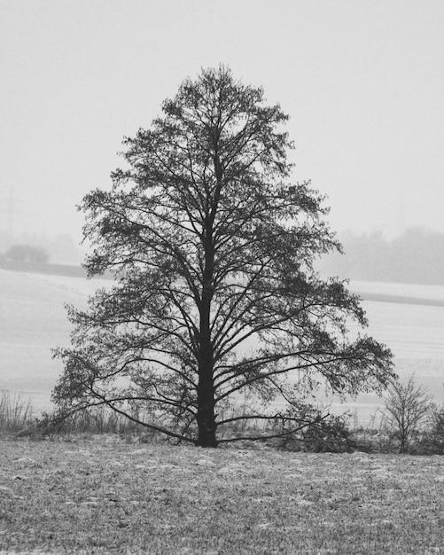 Pionowe Ujęcie Pojedynczego Drzewa W Skali Szarości Darmowe Zdjęcia