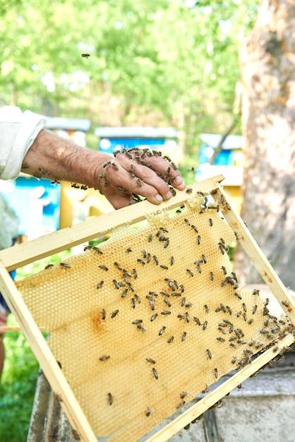 Pionowe Ujęcie Pszczelarza Trzymającego Plaster Miodu Z Pszczołami. Darmowe Zdjęcia