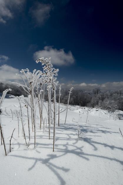 Pionowe Ujęcie Rośliny Pokrytej śniegiem W Zimie Darmowe Zdjęcia