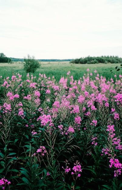 Pionowe Ujęcie Różowe Kwiaty Rosnące Na Polu W Ciągu Dnia Darmowe Zdjęcia