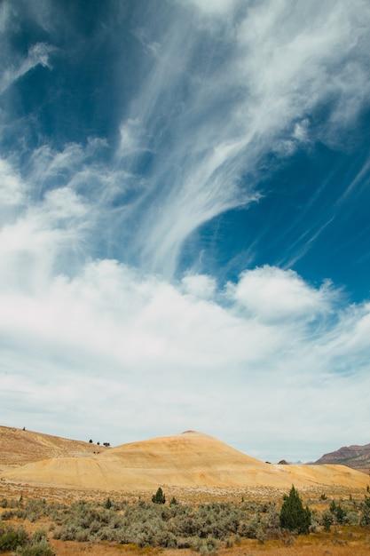 Pionowe Ujęcie Trawy I Mchu Rosnącego Na Polu Pod Zachmurzonym Niebem Darmowe Zdjęcia