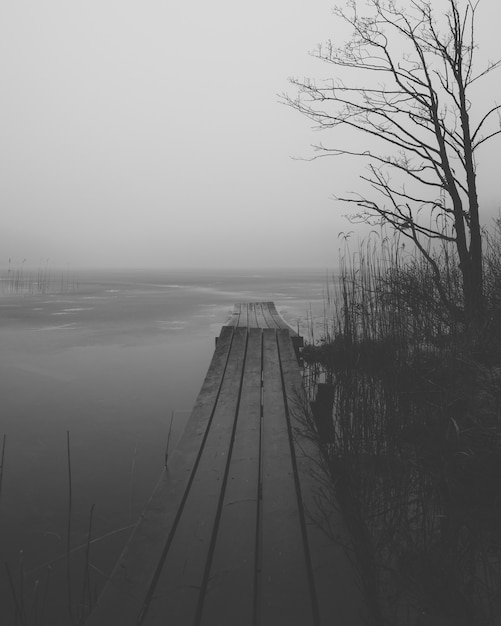 Pionowe Ujęcie W Skali Szarości Drewnianego Doku W Pobliżu Jeziora Otoczonego Krzewami Darmowe Zdjęcia