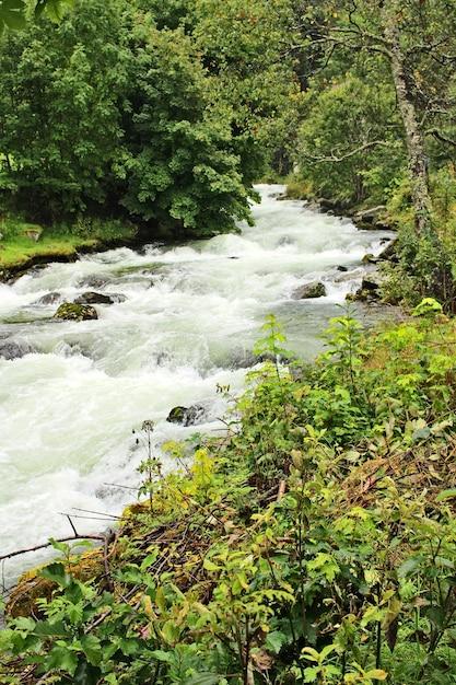 Pionowe Ujęcie Wściekłej Rzeki Otoczonej Pięknymi Drzewami I Roślinami Darmowe Zdjęcia