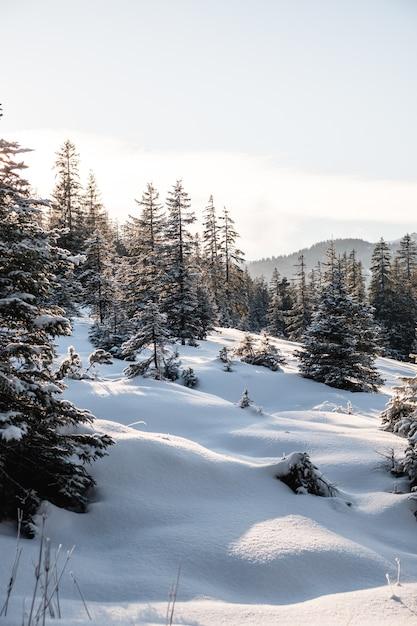 Pionowe Ujęcie Wysokich Drzew Zimą Darmowe Zdjęcia