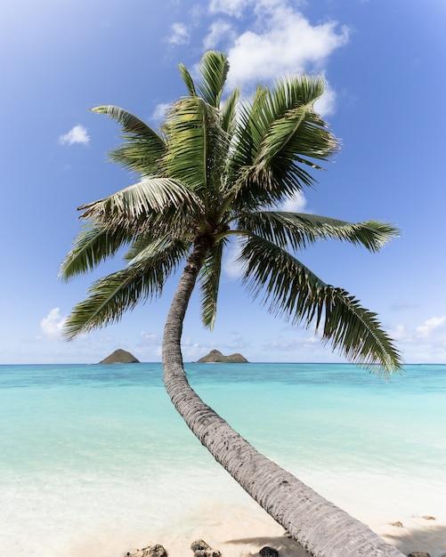 Pionowe Ujęcie Zakrzywionej Palmy Na Plaży Darmowe Zdjęcia