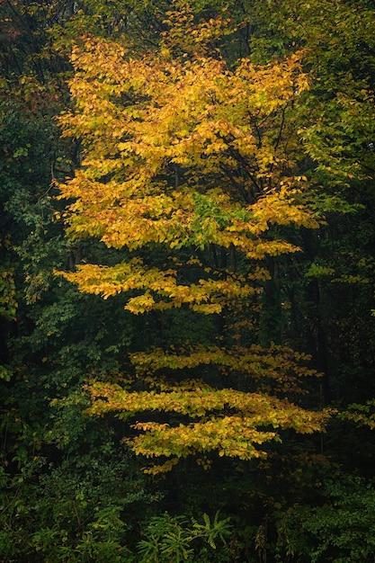 Pionowe Ujęcie żółte Piękne Drzewo W Zielonym Lesie Darmowe Zdjęcia