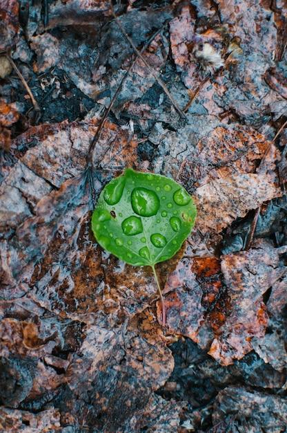 Pionowe Wysoki Kąt Bliska Strzał Z Zielonych Liści Opadłych Na Ziemię Z Waterdrops Na Powierzchni Darmowe Zdjęcia