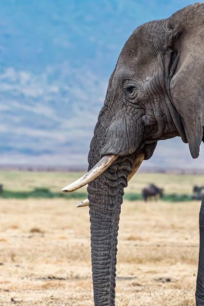 Pionowe Zbliżenie Strzał Głowy Cute Słonia Na Pustyni Darmowe Zdjęcia
