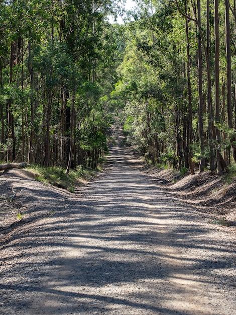 Pionowe Zdjęcie Drogi Otoczonej Drzewami W Lesie W Nasłonecznionym Miejscu Darmowe Zdjęcia