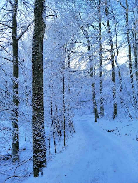 Pionowe Zdjęcie Drzew W Lesie Pokrytym śniegiem W Larvik W Norwegii Darmowe Zdjęcia
