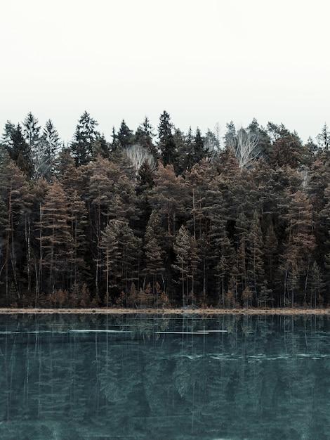 Pionowe Zdjęcie Jeziora Otoczonego Lasem Z Drzewami Odbijającymi Się W Wodzie Darmowe Zdjęcia