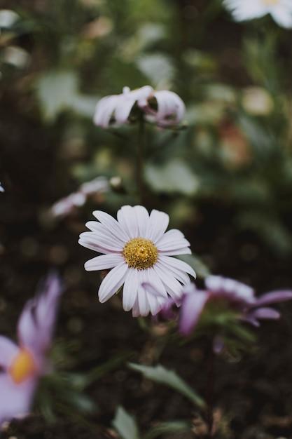 Pionowo Selekcyjna Ostrość Strzelał Piękny Biały Kwiat W Ogródzie Darmowe Zdjęcia