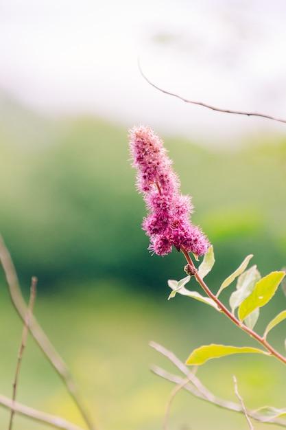 Pionowo Selekcyjny Zbliżenie Strzał Różowy Kwiat Z żółtymi Liśćmi Darmowe Zdjęcia