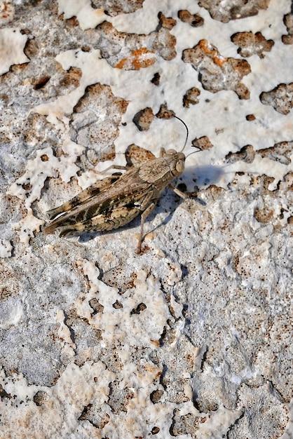 Pionowo Zbliżenie Strzał Mayfly Insekt Na Piaskowatej Ziemi Darmowe Zdjęcia
