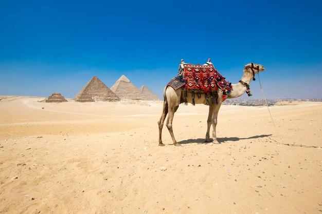 Piramidy Z Pięknym Niebem W Gizie W Kairze, Egipt. Premium Zdjęcia