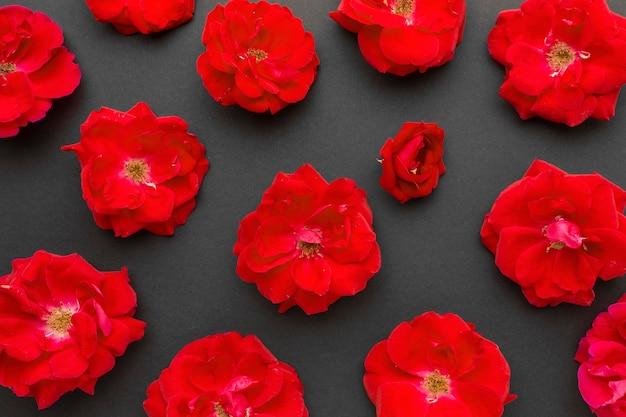 Płaskie Leżały Czerwone Róże Lodowe Darmowe Zdjęcia