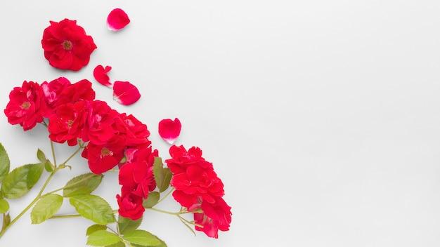 Płaskie Leżały Róże Lodowe Z Przestrzenią Do Kopiowania Darmowe Zdjęcia
