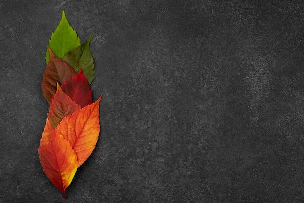 Płaskie Układanie Pięknych Jesiennych Liści Z Miejsca Na Kopię Darmowe Zdjęcia