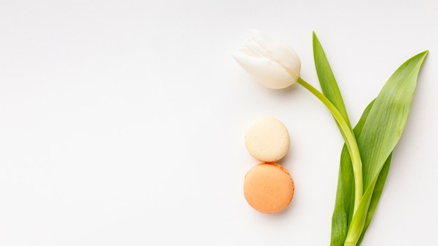 Płaskie Ukształtowanie Dnia Kobiet Z Białym Tulipanem I Miejsce Darmowe Zdjęcia