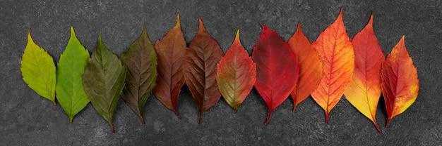 Płasko Ułożone Pięknie Kolorowe Jesienne Liście Darmowe Zdjęcia