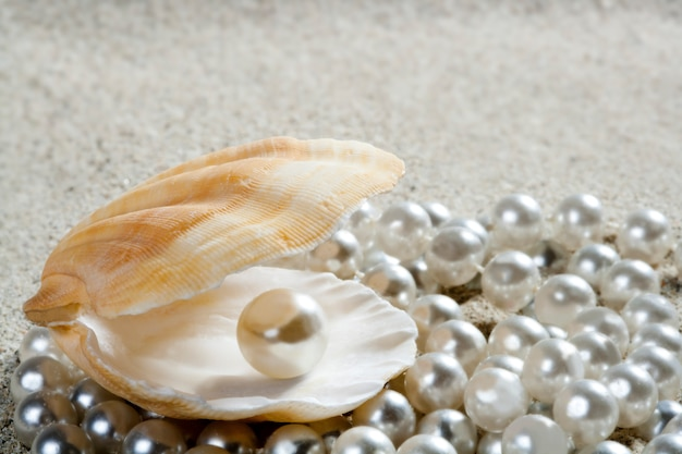 Plaża Biały Piasek Perła Muszla Małż Makro Premium Zdjęcia