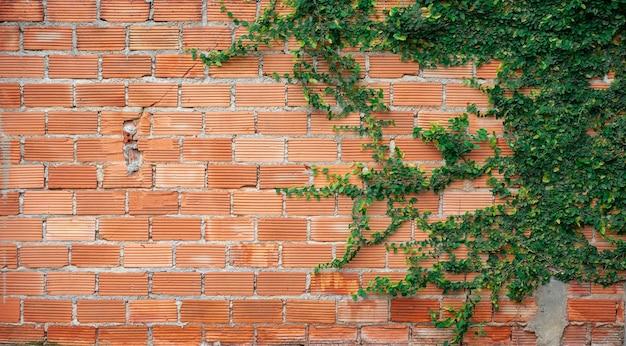 Pnącza Na Tle Pomarańczowy Mur. Premium Zdjęcia