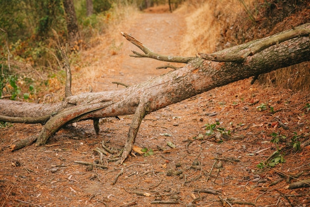 Pnia Drzewa Na ścieżce W Przyrodzie Darmowe Zdjęcia
