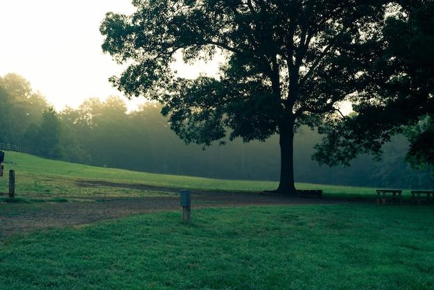 Pojedyncze Duże Piękne Drzewo W Parku Obok Drewnianych Stołów I ławek W Parku Darmowe Zdjęcia