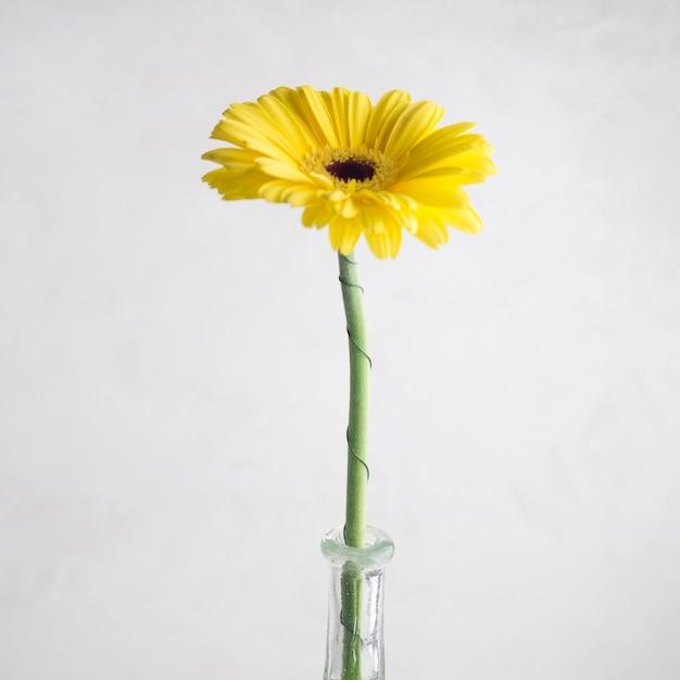 Pojedynczy żółty Kwiat W Wazie Darmowe Zdjęcia