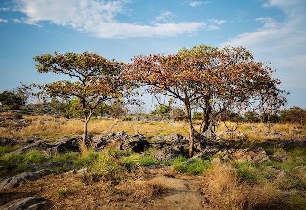 Pole drzewo rock nature miejsce wypoczynek Darmowe Zdjęcia