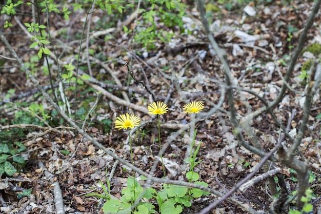 Pole kwitnących żółtych kwiatów Premium Zdjęcia