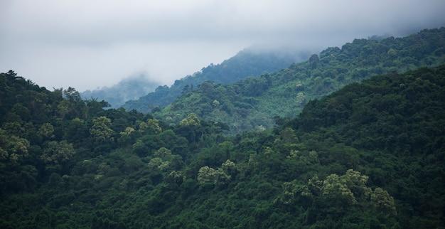 Pole Tropikalny Zielony Las, Park Narodowy Tajlandia Premium Zdjęcia