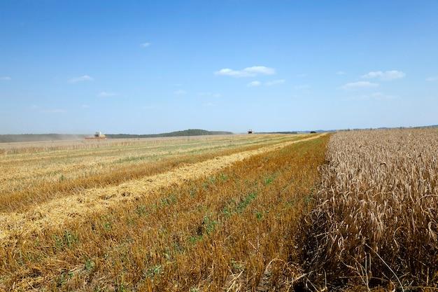 Pole Uprawne, Na Którym Kombajn Do Zbioru Zbóż Premium Zdjęcia