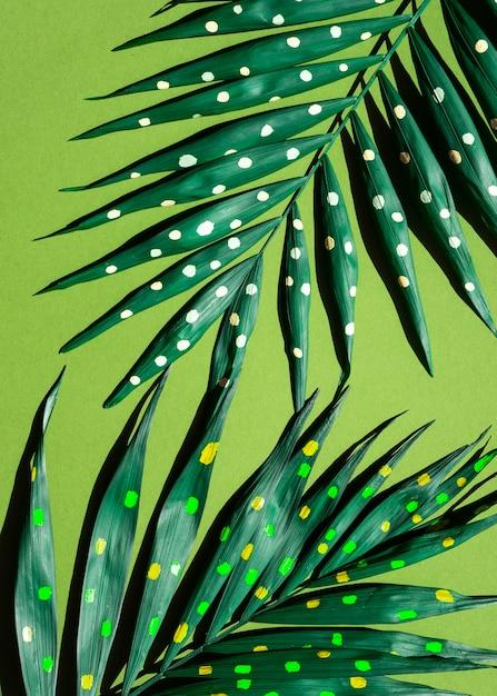 Połówki gałęzi paproci z widokiem z góry malowane kropki Darmowe Zdjęcia