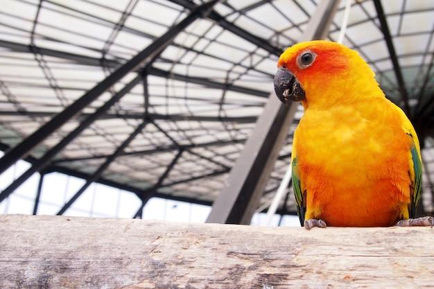 Pomarańczowe Kakadu W Klatce Wygląda Na Szczęśliwego. Premium Zdjęcia