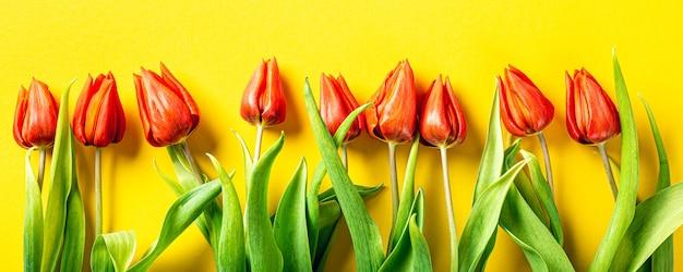 Pomarańczowe Tulipany Na żółtej Powierzchni, Wielkanoc. Urodziny, Dzień Matki Pozdrowienie Koncepcja Z Miejsca Na Kopię. Widok Z Góry, Płaski Układ. Transparent Premium Zdjęcia
