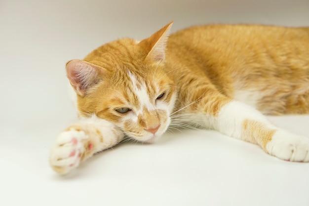 Pomarańczowy Kot Kłamie. Premium Zdjęcia