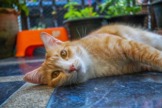 Pomarańczowy Kot Leżący Na Podłodze Patrząc W Ten Sposób Wygląda Uroczo Premium Zdjęcia